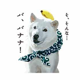 สติ๊กเกอร์ไลน์ชุด Shirato Family