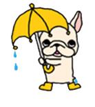 สติ๊กเกอร์น้องหมา French Bulldog กางร่ม ฝนตก