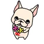 สติ๊กเกอร์น้องหมา French Bulldog ถือดอกไม้