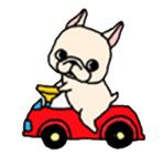 สติ๊กเกอร์น้องหมา French Bulldog ขับรถ