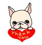 สติ๊กเกอร์น้องหมา French Bulldog thank you